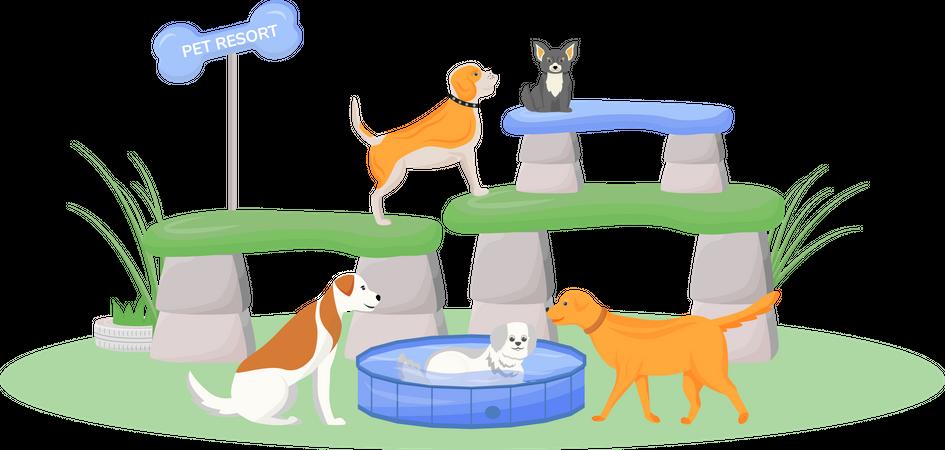 Premium pet resort Illustration