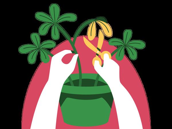 Pruning Illustration