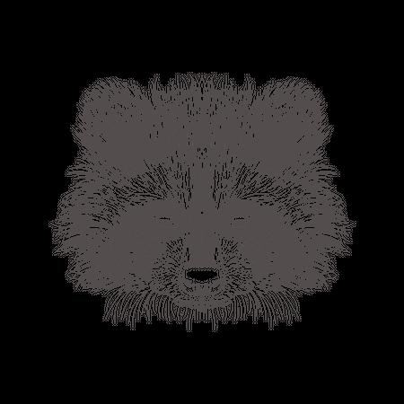 Racoon Illustration