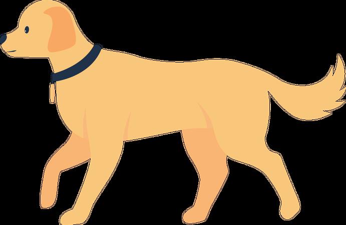 Retriever adoption Illustration