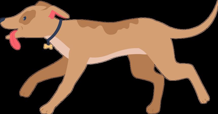Running happy hound Illustration