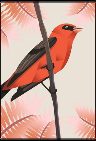 Scarlet tanager Illustration