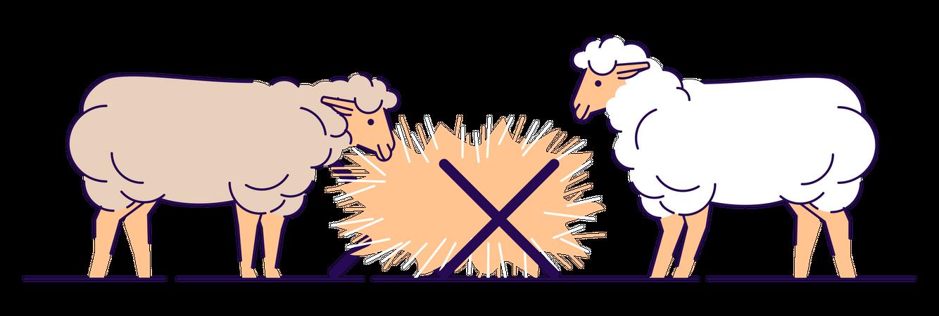 Sheep eating hay Illustration