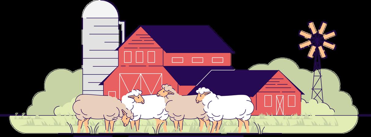 Sheep farm Illustration