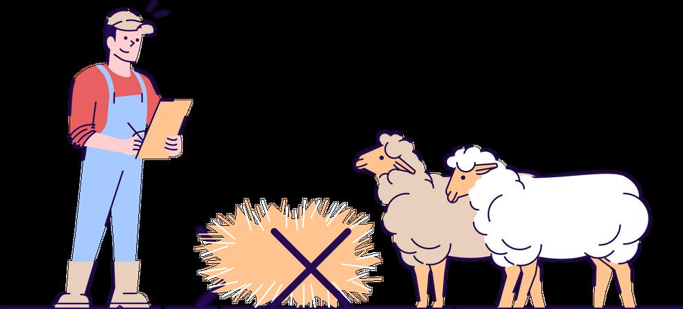 Sheep farming Illustration