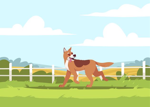 Shepherd Dog Playing At Farm Illustration