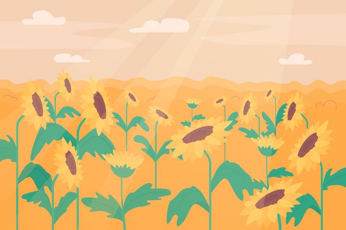 Sunflower field Illustration