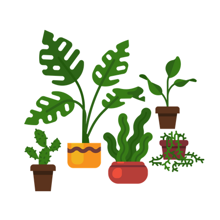 Swiss cheese plant,  sansevieria, cactus and more Illustration