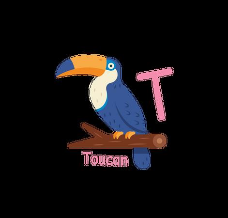 T for Toucan Illustration