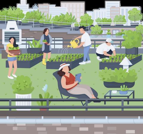 Terrace farming Illustration