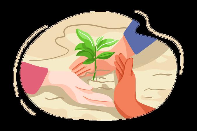 Tree plantation Illustration