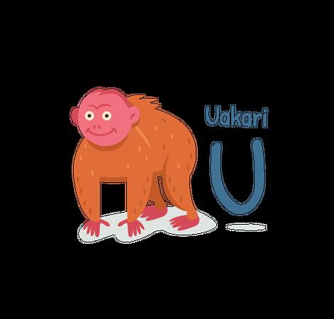 Uakari Illustration