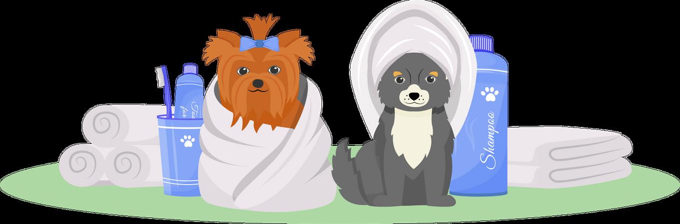 Washed dogs Illustration