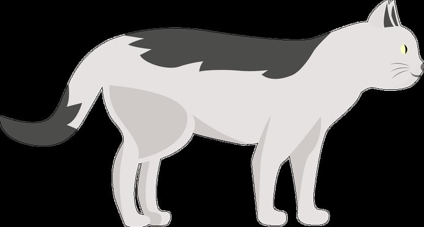 White striped cat Illustration