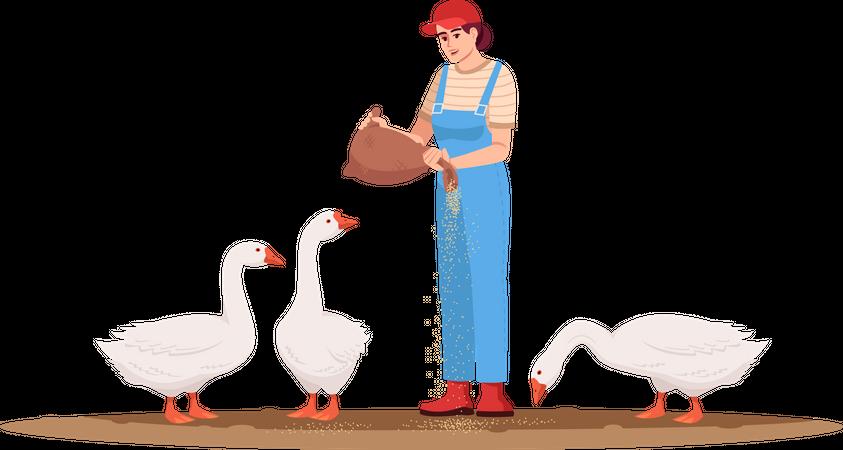 Woman Feeding Ducks Illustration