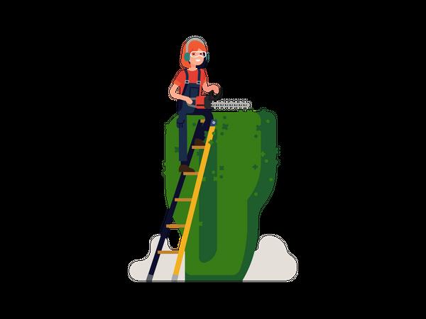 Woman Gardening maintaining boxwood Illustration