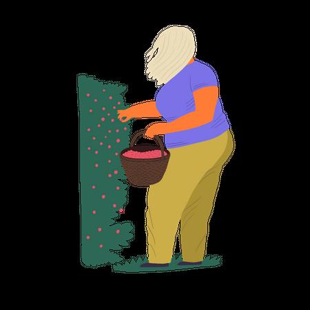 Woman gathering berries in bucket Illustration