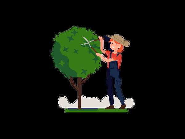 Woman pruning Small tree Illustration