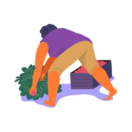 Woman putting berries in box Illustration