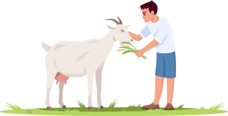 Young Boy Feeding grass to Goat Illustration